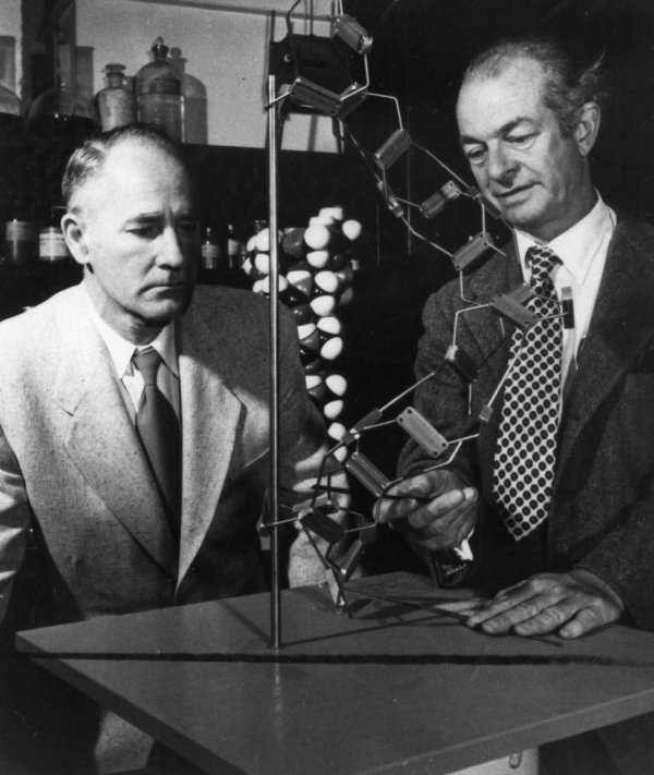 George Beadle and Linus Pauling examining a skeletal model of a polypeptide chain, California Institute of Technology.