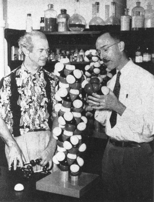 Linus Pauling and Robert Corey examining models of protein structure molecules.