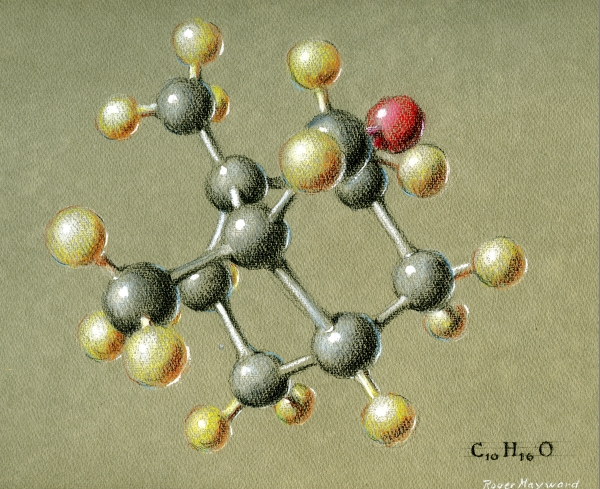 Pastel drawing of Camphor. Page 1. 1964