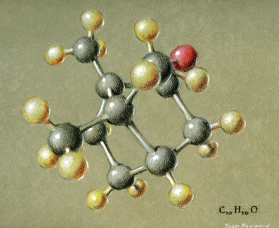 Pastel drawing of Camphor.