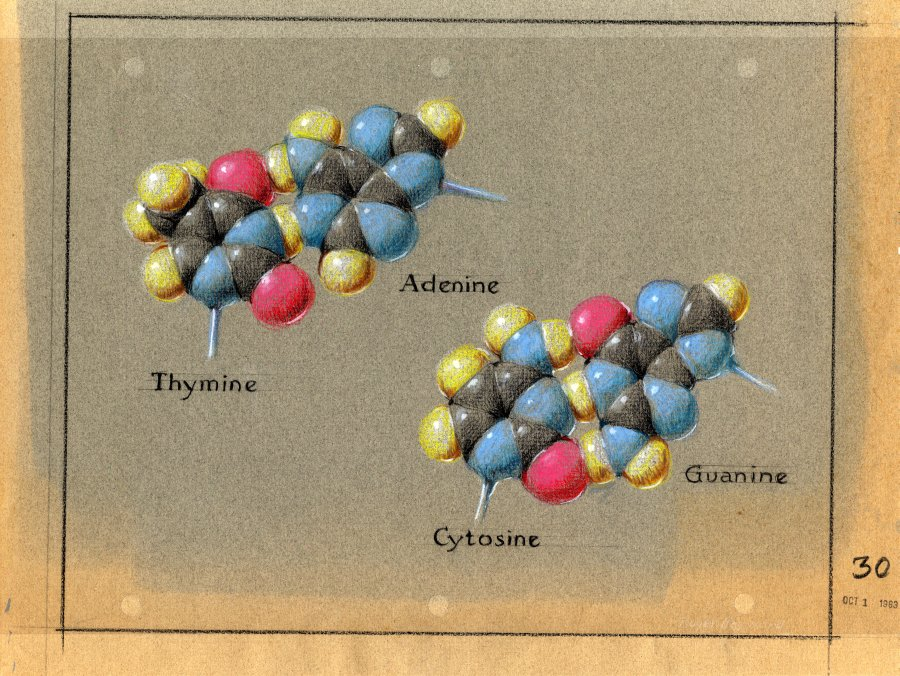Pastel depiction of the DNA base pairs.