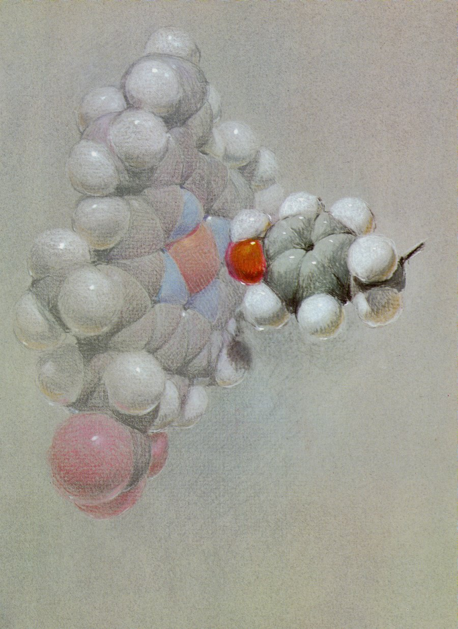 Reproduced pastel drawing of the Hemoglobin structure