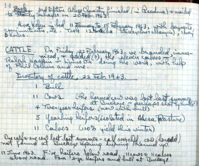 Notes re: 3rd Edition of College Chemistry, Ava Helen Pauling's health, and cattle. Page 1. February 22, 1963