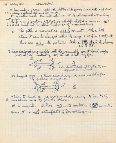 Notes re: Collagen.Page 38. May 30, 1954