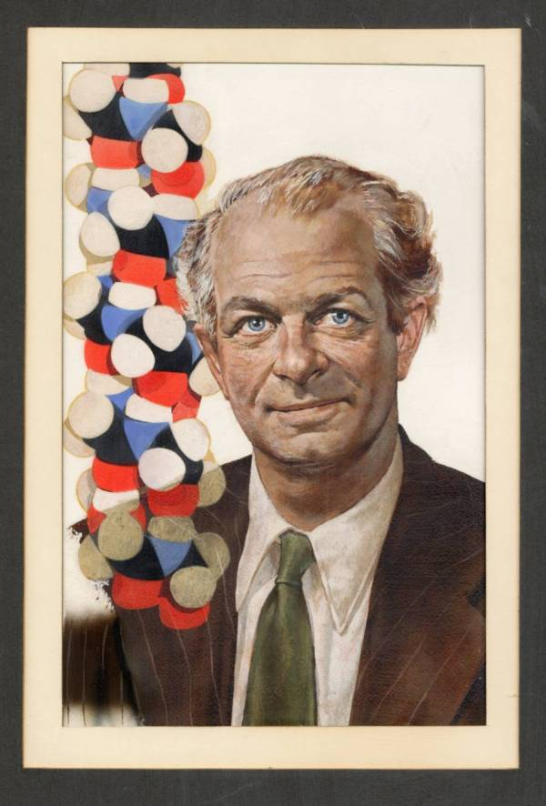 Oil portrait of Linus Pauling, featuring a model of the alpha-helix in the foreground.