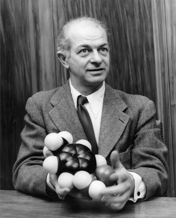 Linus Pauling holding a model of the sulfanilamide molecule.