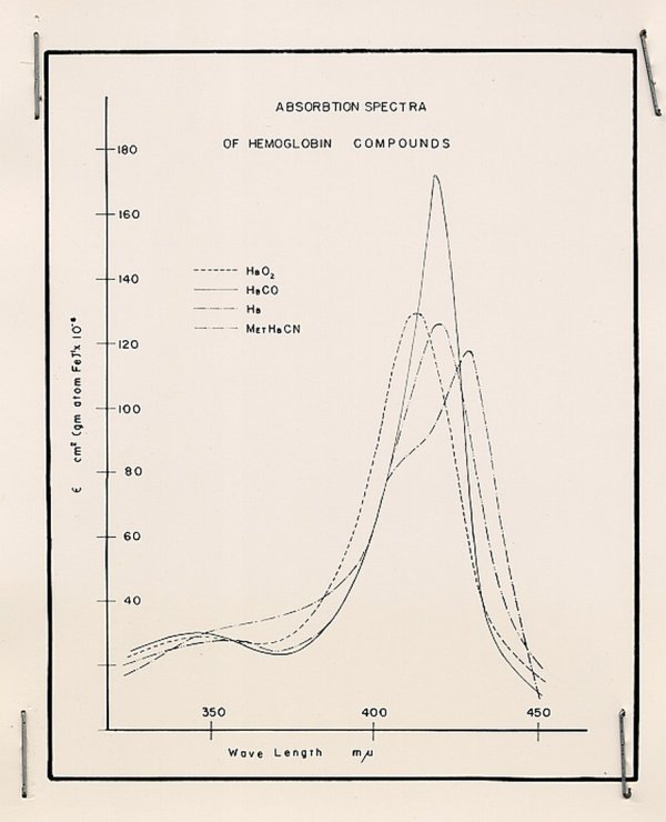 "Figure: ""Absorbtion Spectra of Hemoglobin Compounds"""