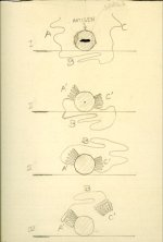 Drawings of antigens and antibodies by Linus Pauling.