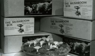 """A B-1-S Mushroom Box producing a crop of gourmet oyster mushrooms."" Image extracted from a pamphlet titled ""The Mushroom Notebook,"" created by Kurtzman's Mushroom Specialists, ca. 1984."