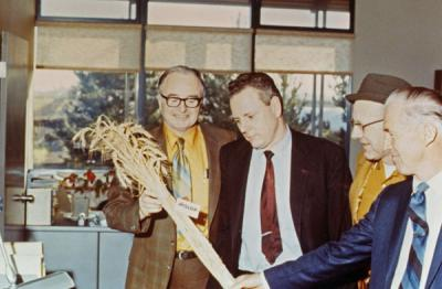 <p>Men examining the Hyslop wheat variety. From left to right: R. W. Henderson, Warren Kronstad (former Genetics Program director), Tom Jackson and Norman Borlaug. The men were examining a new wheat variety named after</p><p>				Professor George R. Hyslop.</p>