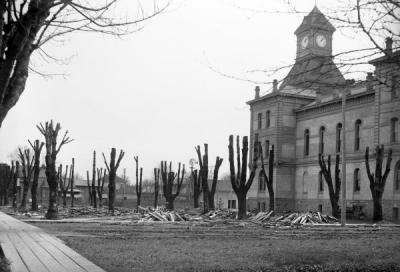 Benton County Courthouse with pruned trees, 1906.