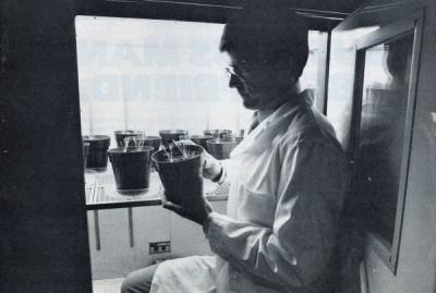 "Image from ""Oregon Business"" captioned: ""Gary Jolliff with Meadowfoam plants,"" March 1983."