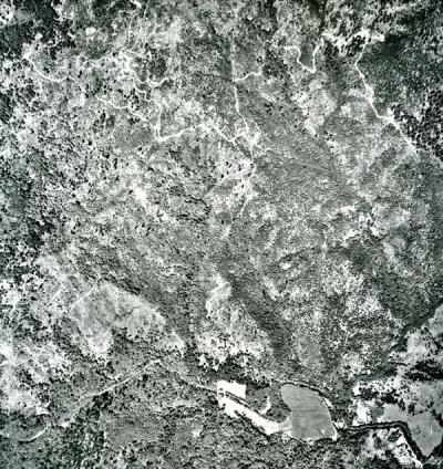 Segment from a Marys Peak Area Aerial Photographs tile.
