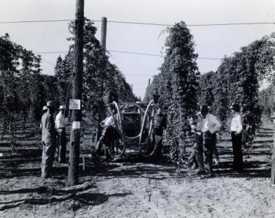 "Image from the ""Hop Pest Report, 1942."" Caption reads: ""Experimental Hop Duster, 1941, Hop field day."""
