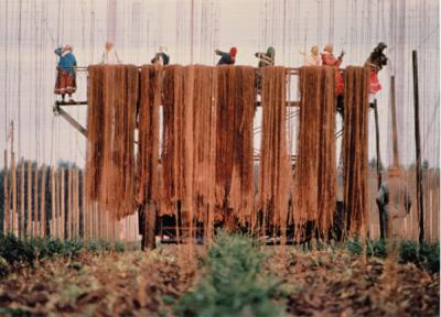 Women stringing a hop field, ca. 1980.