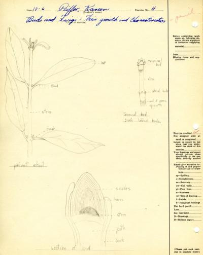 Image from Kareen Peiffer's Botany 101 lab notebook, ca. 1930.