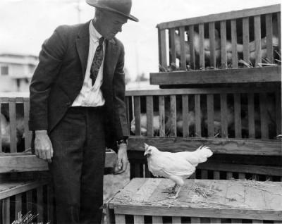 Frank Knowlton of the Poultry Department with a White Leghorn hen, March 1921. Knowlton was a faculty member in the Poultry Department and the Agricultural Experiment Station.