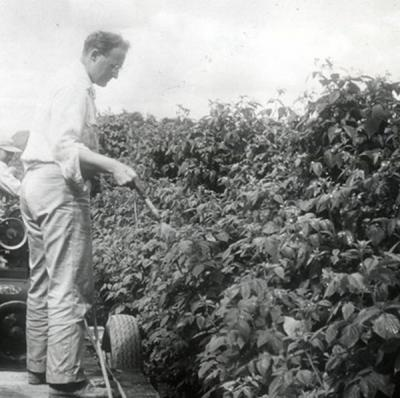 Spraying a red raspberry field, Washington County, ca. 1950