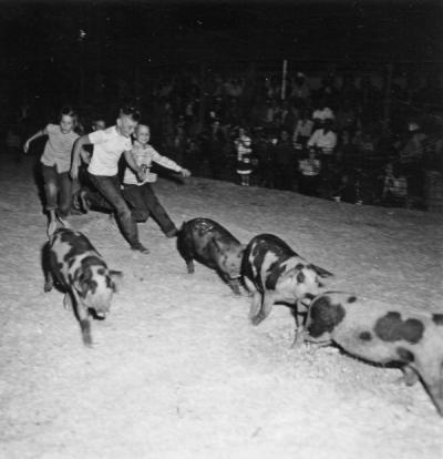 4-H pig scramble, Morrow County, 1953.