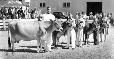 Class of producing dairy cattle shown at the Oregon State Fair, 1938.