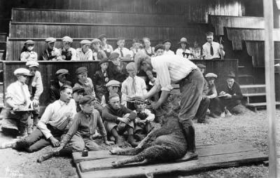 Sheep shearing demonstration at a 4-H summer session, 1922.