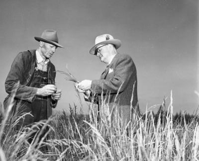 Grass seed plants being examined, 1960.