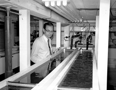 Charles Warren, an OSC fisheries biologist, examining an artificial stream before the production of kraft paper mill wastes at an OSC fisheries laboratory, September 1956.