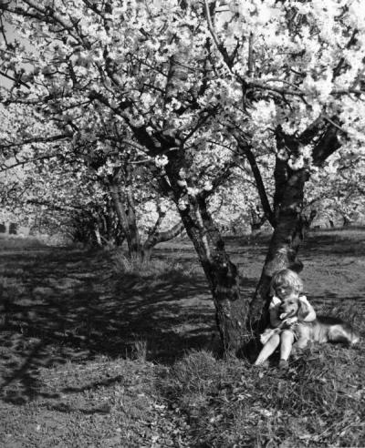 McDonald child in a cherry orchard with her dog, April 1949.