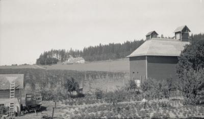 View of Hop Field and Barn, circa 1925