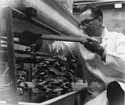 Wilbur Breese with oysters