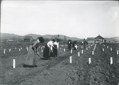 Women students gardening on the OAC campus