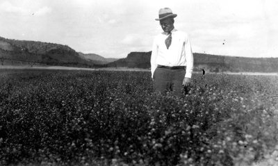 Black and white photograph of Frank Llewellyn Ballard inspecting an alfalfa field.