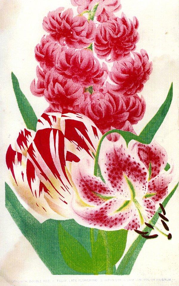 nal-1867.jpg