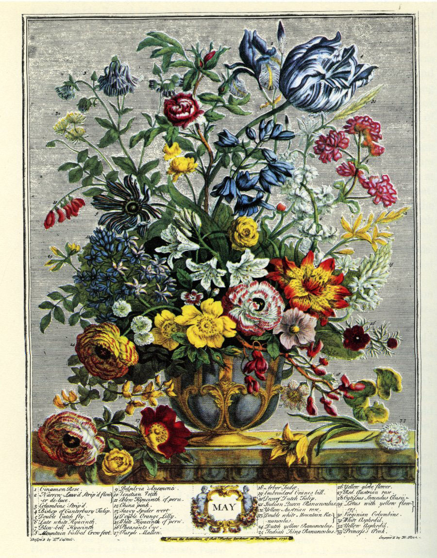 "Ilustración dedicada al mes de Mayo (color). Robert Furber: ""Twelve Months of Flowers"" (1730)."