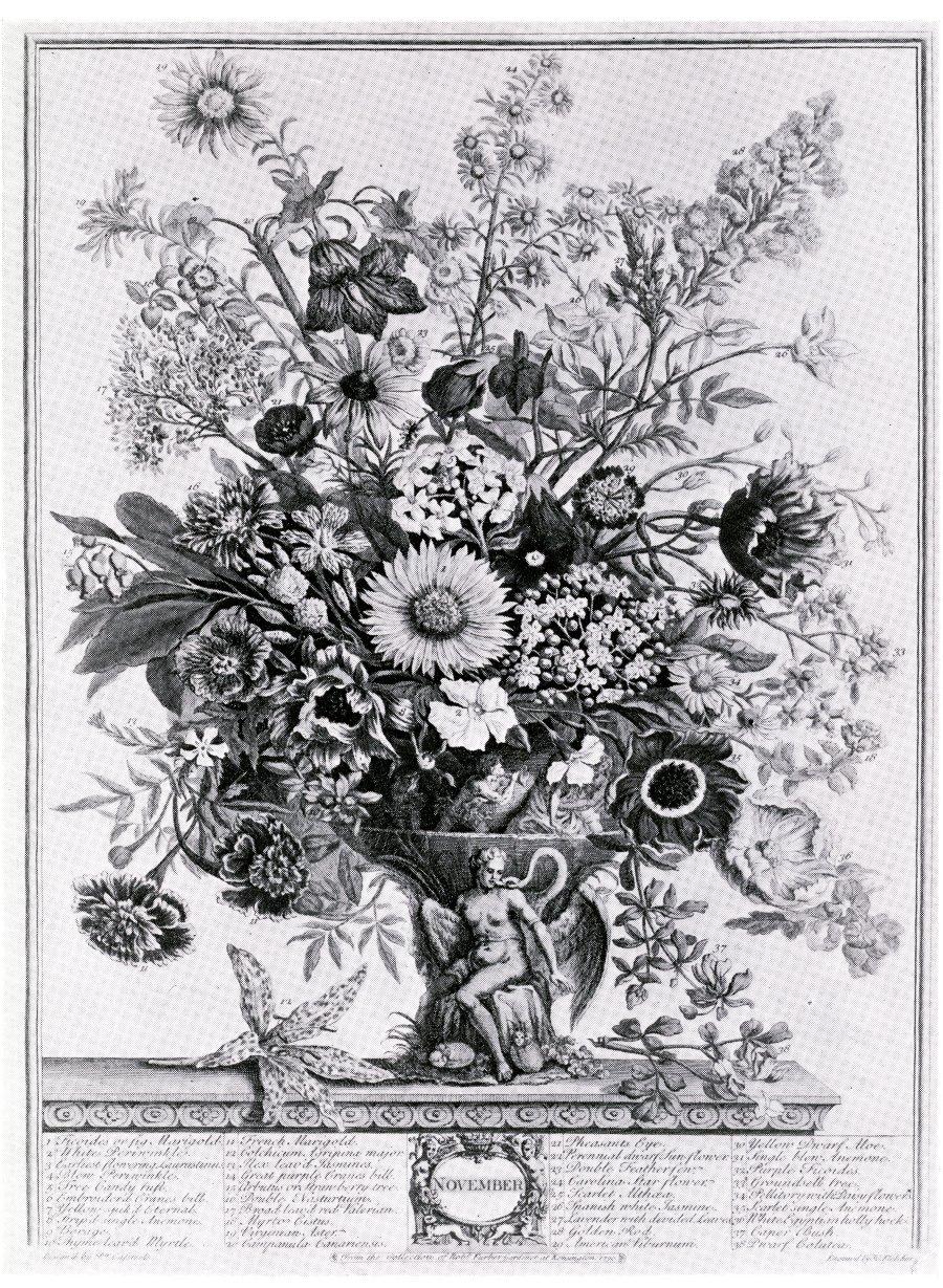"""Ilustración dedicada al mes de Noviembre. Robert Furber: """"Twelve Months of Flowers"""" (1730)."""