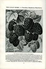 1895.001-028.jpg
