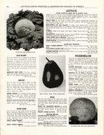 1948.021-046.jpg