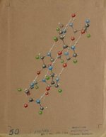 1964b4.1-lpeptide-900w.jpg