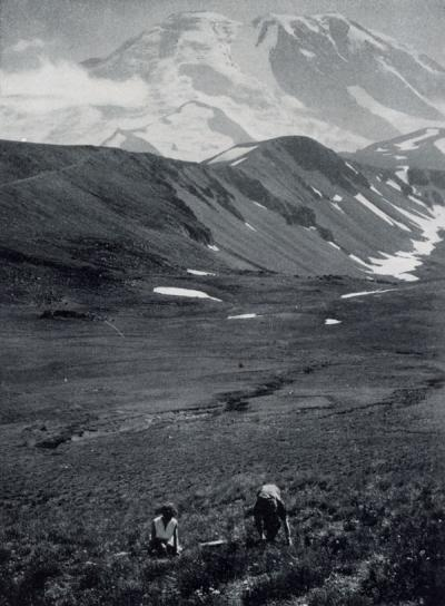 "<p>Image included in the article ""Collecting Western Alpines by Air"" by Warren C. Wilson. The image is captioned ""The 'mighty' collectors on the slope of Fremont Mt.; Burroughs Mt., in the center across the valley and</p><p>				impressive Mt. Rainier in the distance.""</p>"