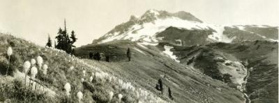 Mt. Hood from Paradise Park, ca. 1925.
