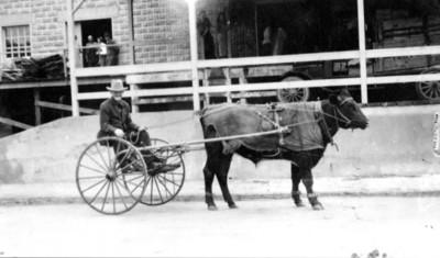 Cow-drawn cart