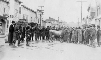 Cattle Judging, 1918