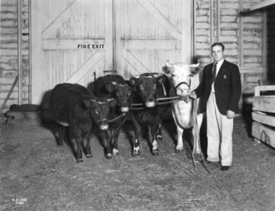 Cliff Conrad with Champion Herd, 1931