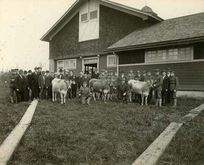 Cattle Judging, 1908