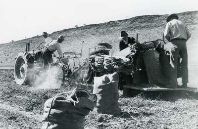 Farm Labor, 1945