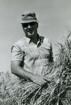 Warren Kronstad Harvesting Barley, 1976