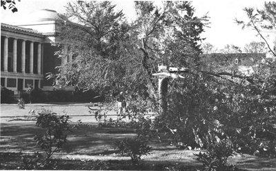 Columbus Day Windstorm Damage, 1962