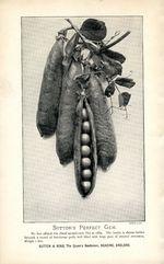 1895.002-sweetpeas.jpg