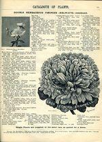1897.004-123.jpg