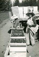 http://scarc.library.oregonstate.edu/temp/p054-women-harvest.jpg